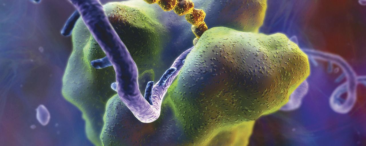 단백질 합성 효소, 더욱 발달한 추가 역할을 수행하다